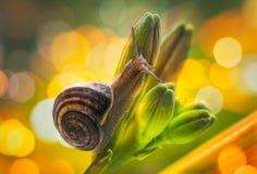Trädgårds- snail arkivbild