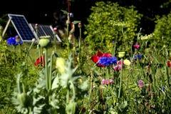 trädgårds- sol- Arkivbilder