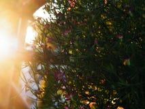 trädgårds- solnedgång Arkivbild