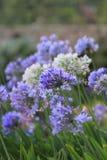 trädgårds- sommar för blomningblommor Arkivfoton