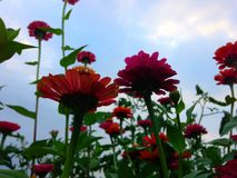 trädgårds- sommar för blomningblommor Arkivbild
