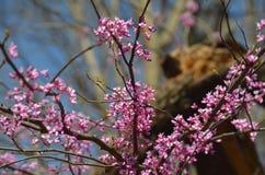 trädgårds- sommar för blomningblommor Arkivbilder