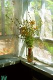 trädgårds- sommar för blomningblommor royaltyfri bild