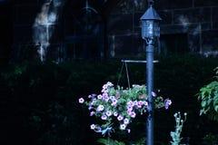 trädgårds- sommar för blomningblommor Royaltyfria Bilder