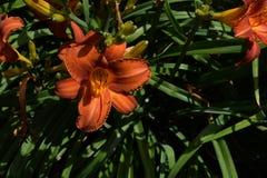 trädgårds- sommar för blomningblommor Royaltyfri Fotografi