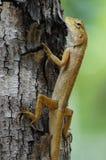 Trädgårds- staket Lizard Royaltyfri Bild