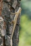 Trädgårds- staket Lizard på ett träd Royaltyfria Foton