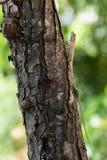 Trädgårds- staket Lizard som upp klättrar ett träd Fotografering för Bildbyråer