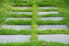 Trädgårds- stenbana med gräs som växer upp mellan stenarna Arkivfoto