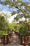 trädgårds- stenwalkwayspolning Arkivbild