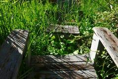 Trädgårds- stolar som är fördunklade vid högväxta ogräs och skuggor Royaltyfri Bild