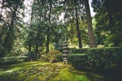 Trädgårds- struktur och vegitation på en japansk trädgård Royaltyfria Foton