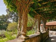Trädgårds- terrass med filialer Royaltyfri Fotografi