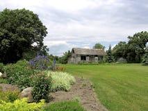trädgårds- timjan Arkivfoton