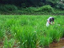 trädgårds- tokyo arbetare Fotografering för Bildbyråer