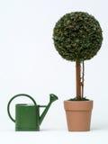 trädgårds- topiary Arkivbilder