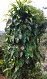 Trädgårds- träd Arkivbild