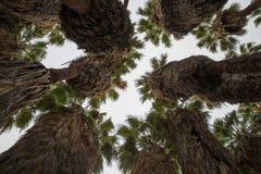 Trädgårds- träd för indier Fotografering för Bildbyråer
