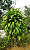 Trädgårds- träd image3 Arkivfoton