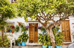 Trädgårds- träd på den hemtrevliga gatan Arkivbild