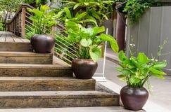 trädgårds- trädgårdar hamilton New Zealand för design Royaltyfri Bild