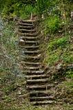 Trädgårds- trappuppgång på Bramasole Royaltyfria Foton