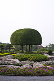 trädgårds- tree Arkivbild