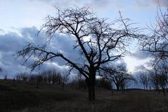 trädgårds- tree Arkivfoto