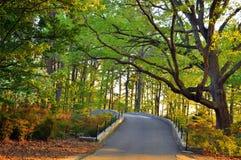 trädgårds- trees Fotografering för Bildbyråer
