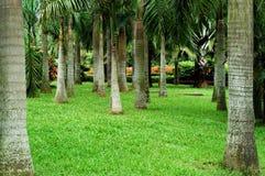 trädgårds- tropiskt Fotografering för Bildbyråer