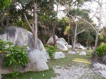 trädgårds- tropiskt Arkivbild