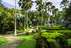 trädgårds- tropiskt för gränd Royaltyfri Bild
