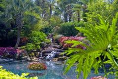 trädgårds- tropiskt vatten arkivfoton