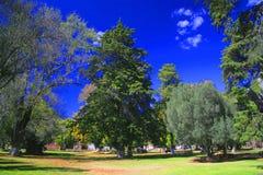 trädgårds- tzinzunzan Royaltyfri Fotografi