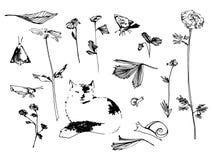 Trädgårds- uppsättning Blomman, fjärilen och snigeln skissar illustrationen Hand dragen vektorbild Arkivfoton