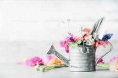 Trädgårds- uppsättningstilleben med att bevattna canen och att arbeta i trädgården hjälpmedel och blommor på den vita tabellen royaltyfri foto
