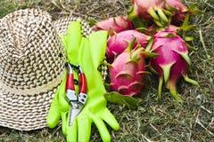 Trädgårds- utrustning Arkivbilder