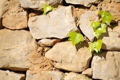 trädgårds- vägg Arkivbild