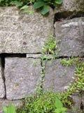 Trädgårds- vägg Arkivbilder