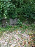Trädgårds- vägg Arkivfoton