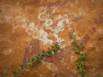 Trädgårds- vägg för Grunge Fotografering för Bildbyråer