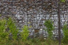 Trädgårds- vägg med grön flora arkivbilder