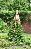 Trädgårds- växande tipi Royaltyfria Foton