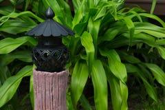 trädgårds- växt Royaltyfri Foto