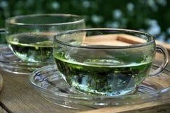 trädgårds- växt- tea Royaltyfri Foto