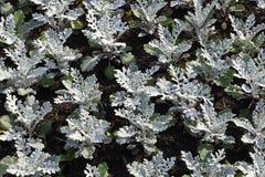 trädgårds- växter Arkivbilder