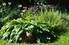trädgårds- växter Arkivfoto