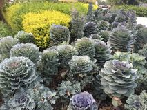 Trädgårds- växter Arkivbild
