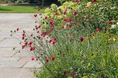 Trädgårds- växter för lös stuga Arkivbilder