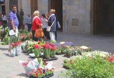 Trädgårds- växter som är till salu på marknaden i incaen, Mallorca, Spanien Fotografering för Bildbyråer